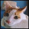 http://avatars.atelier801.com/1550/551550.jpg?1511091352181