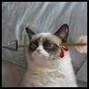 http://avatars.atelier801.com/428/19840428.jpg?1467604808571