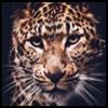 http://avatars.atelier801.com/4847/17864847.jpg?1515387622939