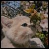 http://avatars.atelier801.com/6720/70836720.jpg?1585371628975