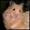 http://avatars.atelier801.com/7242/94177242.jpg?1596513619429